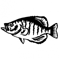 Fish Decal 2