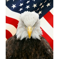 Bald Eagle with Flag Digital Vinyl Decal Sticker